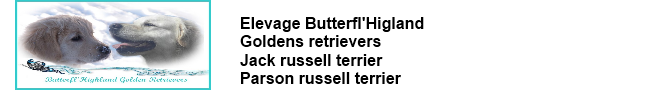 Elevage Butterfl'Higland