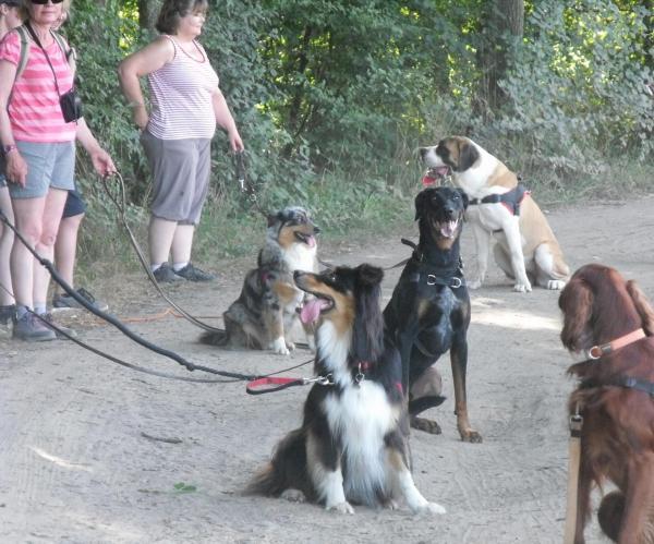 club canin dans l'yonne